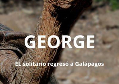 «GEORGE» EL solitario regresó a Galápagos