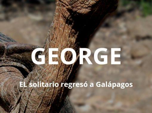 """""""GEORGE"""" EL solitario regresó a Galápagos"""